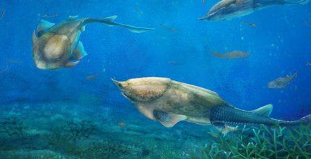Bir Balığın Psikanalizi